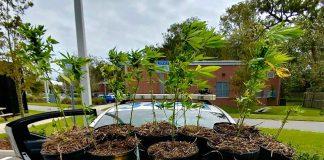 Polícia procura donos de plantas de maconha na Flórida (Foto: Gainesville Police Department/Twitter)